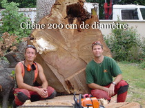 Abattage d'un chene sur pau en 2005 par forest