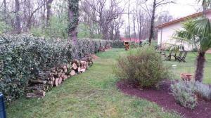 abattage de 3 chênes avec rangement et nettoyage